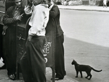 Untitled, New York (boys, mailbox, cat)
