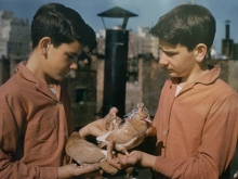 Untitled, New York (two boys with pigeons), 1963
