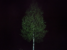 Juliane Eirich, Birch Tree II, 2014